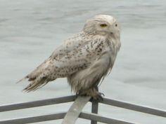 Birding in Morris and Somerset Counties, NJ website