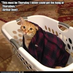 """This must be Thursday. I never could get the hang of   Thursdays.""   (Arthur Dent)"