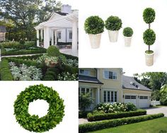 Boxwoods - boxwood hedges, boxwood trees, boxwood balls and wreaths ! Love them all.... #colonial