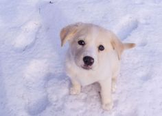 Pooch Preparedness: The Dog Emergency Survival Kit - Food Storage and Survival