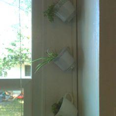 Teacup garden in my kitchen window.