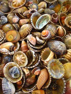beaches, sea shell, god, pattern, treasur