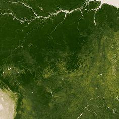 Green Vegetation, NASA
