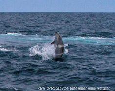Delfín crea un efecto de aro de 'hula hoop' girando en el mar - Dolphin creates hula hoop effect twirling sea