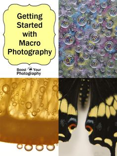 Getting Started with Macro Photography | Boost Your Photography