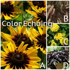 Create Stunning Container Gardens - Color Echoing Made Simple / Armstrong Garden Centers