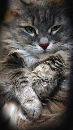 What a gorgeous kitty. <3.