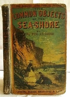 → Common Objects of the Seashore by Rev. J. G. Wood