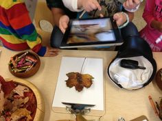 Using Leafsnap App on iPad to identify leaves :-)