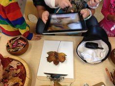 Using Leafsnap App on iPad to identify leaves :-) tree studi