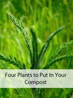 Many garden weeds can actually add nutrients to your compost. Image Credit: JacobEnos / CC by 2.0