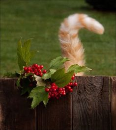~ Holiday Tail ~