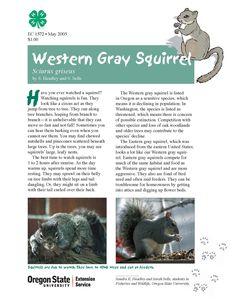 Western gray squirrel : Sciurus griseus by the Oregon State University Extension Service