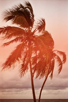 #vintage, #palmtrees