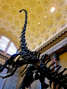 Natural History Museum - New York, NY