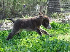 Baby donkey makes being an ass look good.