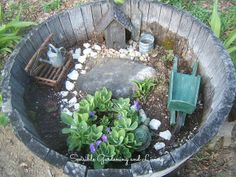 miniature garden in a barrel