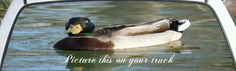 Mallard Duck Swimming on Pond Pickup Window Graphic. Get a duck scene for your rear window of your car or truck today.