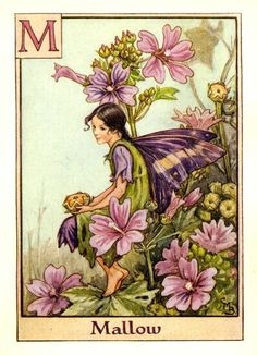 mari barker, cice mari, mallow flower, art, mallow fairi, alphabet, flower fairies, cicely mary barker, vintage flowers