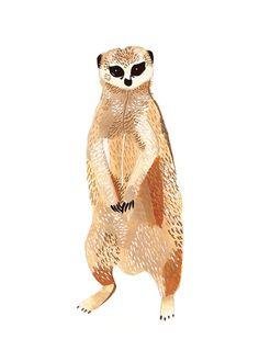 Meerkat by Small Adventure
