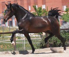 Nice Looking Horse...