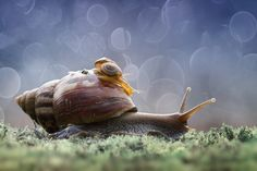 Photograph Save Me Mom by  Hendy Mp on 500px  ( think again before you kill a snail)