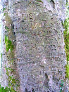 Ireland's Natural Royalty: Heritage Trees of Ireland via @Iris T. Fireside