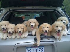 Pups in the jeep