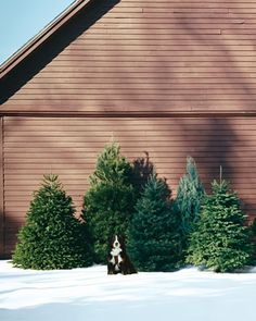 7 tips for picking the perfect #Christmas tree. (You'll be glad you pinned this!)