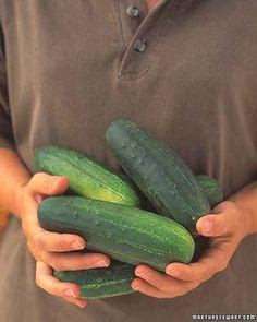 Vegetable growing guide