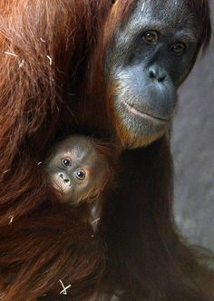Moms of the animal kingdom (and their babies) - Slideshows and Picture Stories - TODAY.com