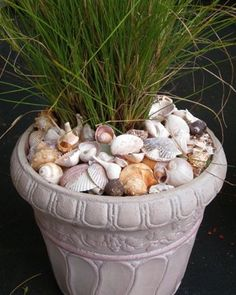 Use shells to top off a pot. Why have I never thought of this as a way to use my collected shells?