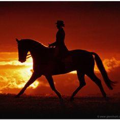 Equine love ...