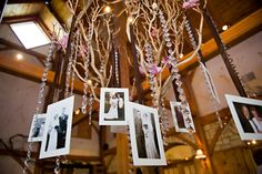Vintage family wedding photos were hung in the Manzanita tree along with ...