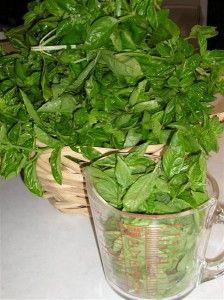 How To Harvest & Preserve Basil