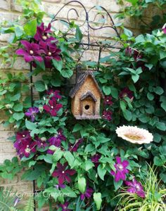 Clematis 'Niobe' with garden decor, how sweet - birdhouse and bird bath.