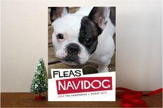 Fleas Navidog Christmas Photo Cards.@ Allison Kristal-Kenyon