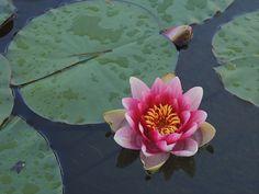 Información sobre plantas acuáticas en: http://www.elhogarnatural.com/acuaticas.htm