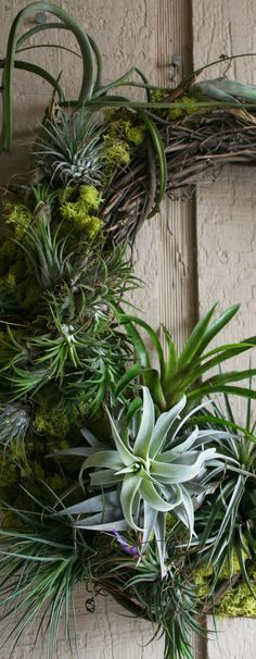 The Rainforest Garden: DIY Mossy Tillandsia Wreath garden indoor, rainforest garden, tillandsia wreath