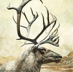 Reindeer  Animals Portrait Landscape by ZenzPhotography on Etsy,