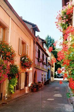 franc photo, spring bloom