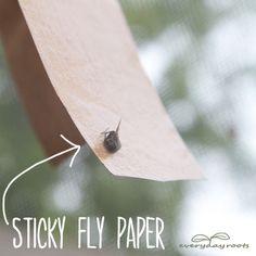 fly paper, clean, flies trap, dee garden, bug