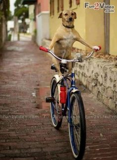 Cycle Dog Funny Picture  [ More Funny Pictures: http://www.fun2video.com ]