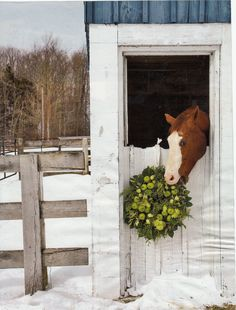 Horse stall decorations on pinterest horse stalls horse costumes