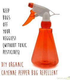 DIY Organic Cayenne Pepper Bug Repellent Spray (via Gerson.org)