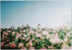 pink flowers, memori, color palettes, field flowers, films