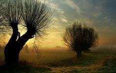 Janusz Wanczyk - Morning Willow