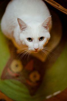 Cute cat:)