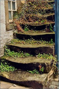 stone steps, natur reclaim, autumn leaves, stairway, stone stair, staircas, well worn, mother nature, garden stairs