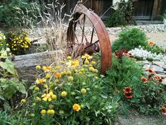 Country-Inspired Flower Bed: Natural country charm marries the old wagon wheels with Blanket Flower (Gaillardia sp.), Sweet Alyssum, California Poppy, Eyebrow Grass (Bouteloua gracilis) and other flowers. From HGTV.com's Garden Galleries